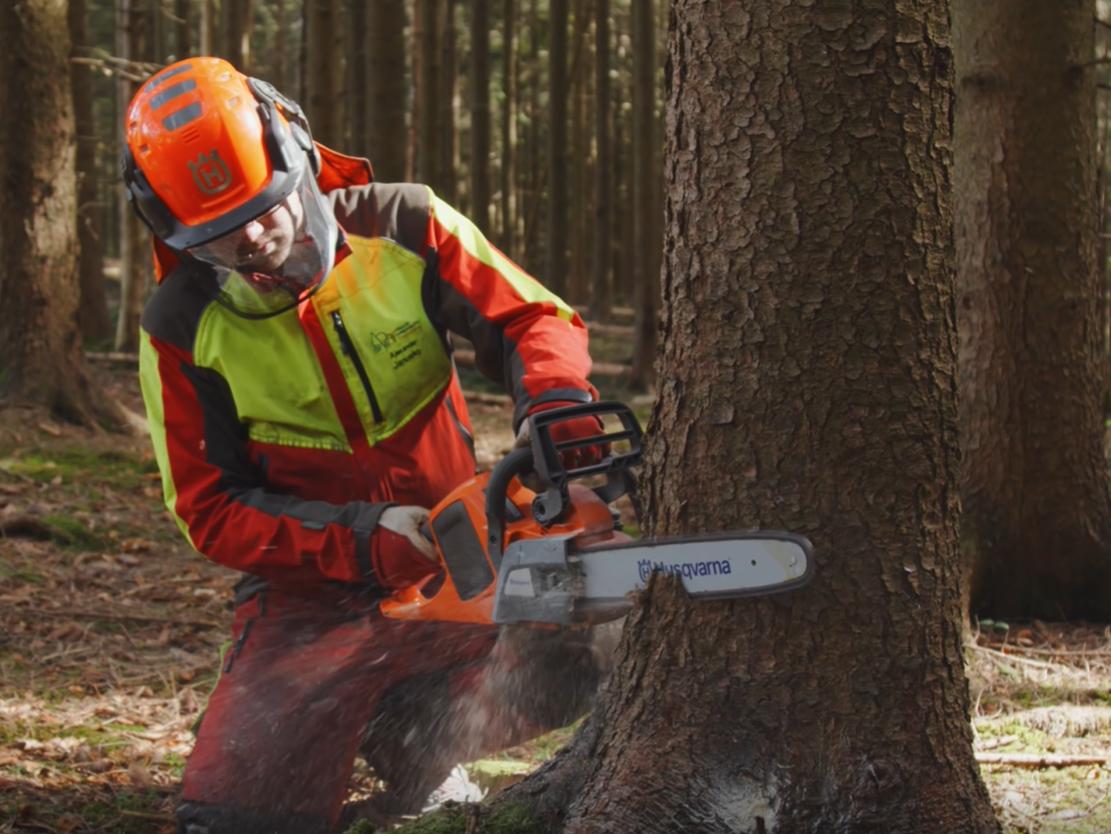 Akku-Motorsäge im Forsteinsatz - im Bild Erstdurchforstung in einem Fichtenbestand