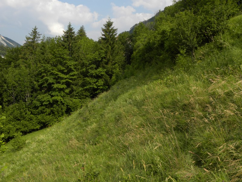 Brachgefallener Trespen-Halbtrockenrasen