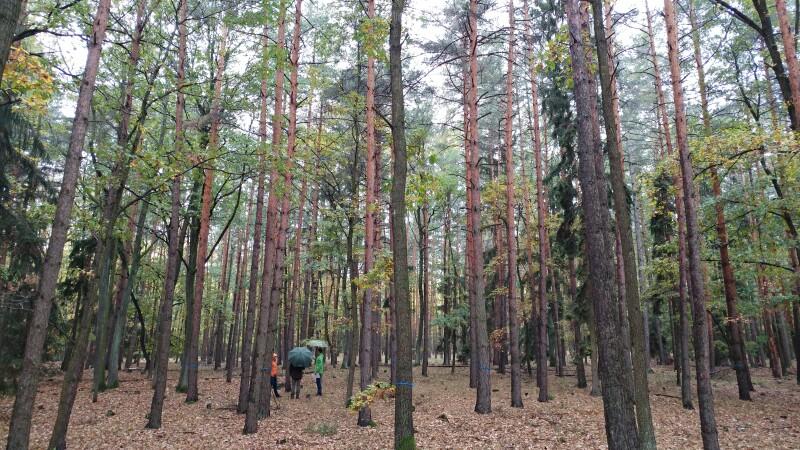 Eichen-Kiefern-Mischwald in Maissau, Traun'sche Forstverwaltung